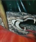 Réalisation d'une pomme grandeur humaine avec un serpent autour.