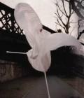 Création du costume en soie, grandes ailes très légères.