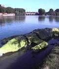 Réalisation d'un crocodile géant flottant en bois et bâche.